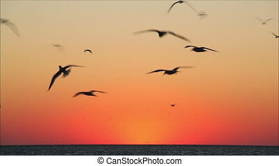 lot of birds flying in the red sky  1