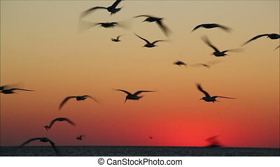 lot of birds flying in the red sky 2