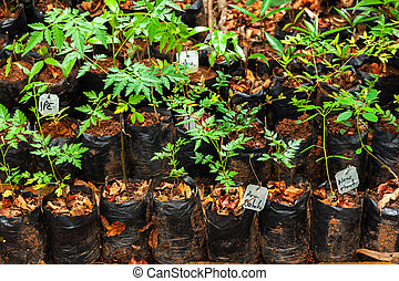 Lot of different plastic seedling bags with small plants - seeding growing