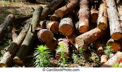 Lot of felled trunks from trees neatly folded - A lot of...