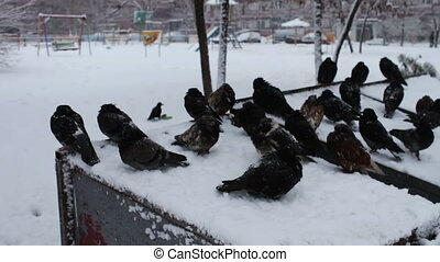 Lot of frozen pigeons sitting on a snowy trash box