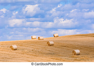 Haystacks on the Field - Lot of Haystacks on the Field in...