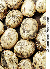 lot of potatoes background