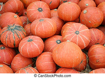 Lot of Pumpkins
