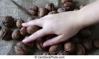 Lot of ripe walnuts with peel - Lots of ripe walnuts in a...