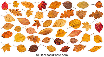 lot of various dried autumn fallen leaves isolated on white...
