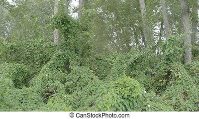 lotissements, champ, bindweed, forêt, vignes