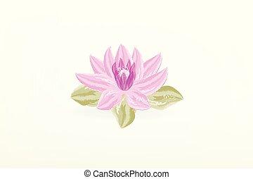 loto, aquarela, flor, pintura, logotipo
