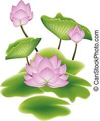 loto, foglie, fiore