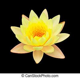 loto, isolato, giallo