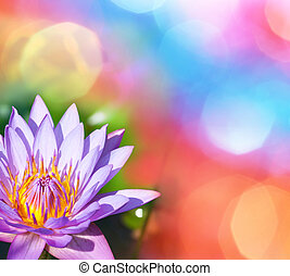 Lotos - lotus on abstract background