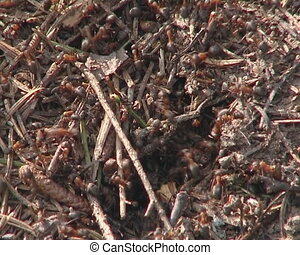 Lots of ants hard working