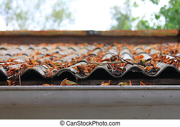autumn leaves on a roof - Lots of autumn leaves on a roof