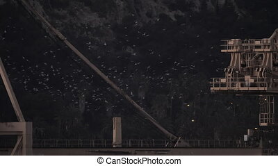 Lots of birds - A big amount of birds, circling above an...