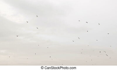 Lots Of Birds Flying In Cloudy Sky