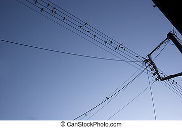 lots of birds on electric wires in greece
