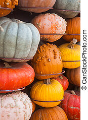 Lots of colorful pumpkins. Background for the autumn season...