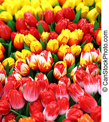 colorful tulips for sale in the flower market