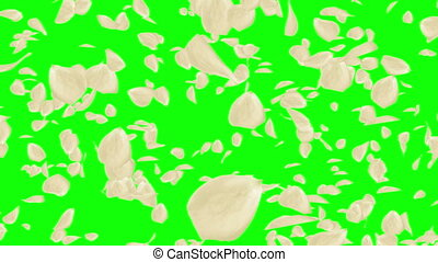Lots of falling beautiful white rose petals isolated on green screen