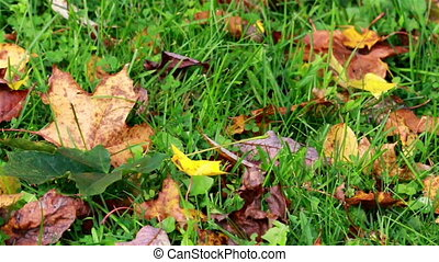 Lots of falling leaves everywhere grass