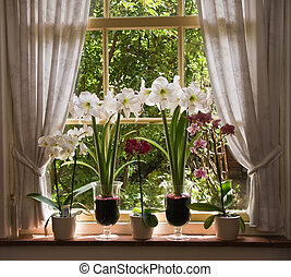 Lots of flowers in old window