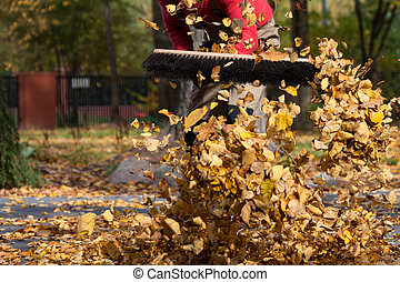 Lots of leaves in a garden