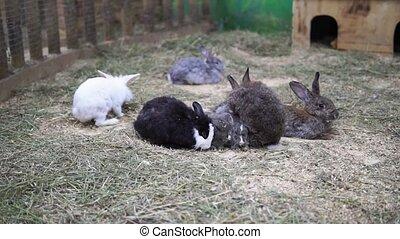 Lots of little rabbits. Easter dwarf decorative fluffy rabbit. Symbol of Easter.