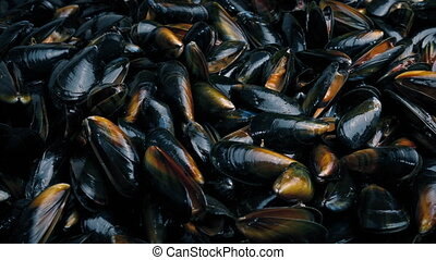 Lots Of Mussels Seafood - Lots of mussels piled up tracking...