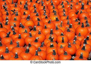 Lots Of Pumpkins 2