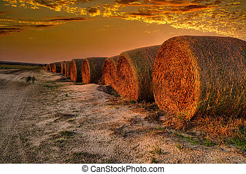 round hay stacks in the sunset