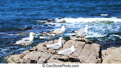 lots of seagulls sitting on a rock
