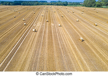 lots of yellow bales of straw lying on a field