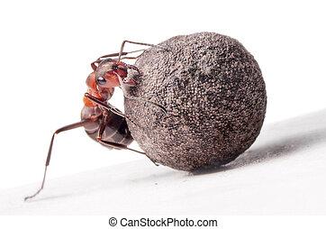 lotte, pietra, formica, pesante