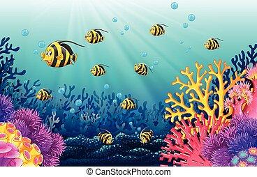 lotti, fish, mare, sotto