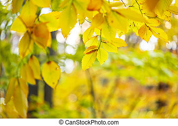lotti, foglie, albero, su, autunno, circondare, tronco, chiudere