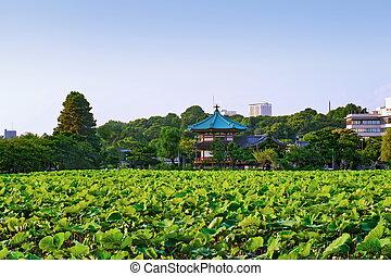 Lotus at Shinobazu Pond in Ueno Park, Tokyo, Japan