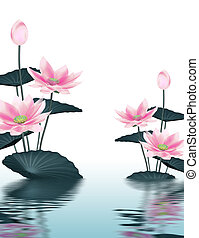 Lotus flowers reflected in the water surface