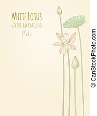 Lotus Background. Vector illustration, eps10.