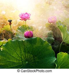 Lotus - beautiful lotus flower in blooming at sunset