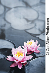 lotus, bloesems