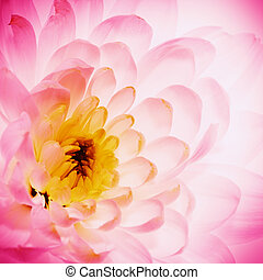 lotus blomstr, kronblade, idet, abstrakt, naturlig,...