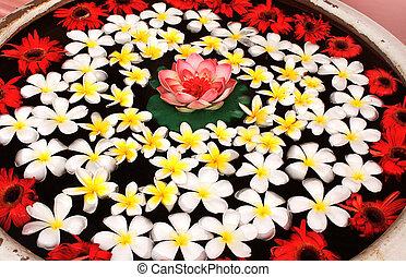 lotus, eau, fleurs, plumeria