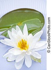 lotus fleur