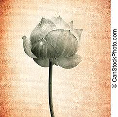 lotus, flowe, papier, vieux