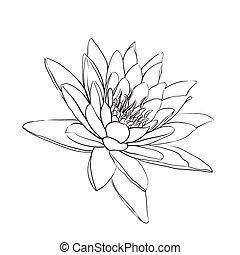 lotus flower - outline lotus flower on white background