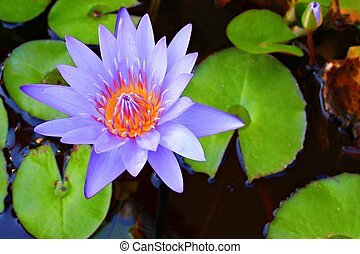 Lotus flower for Buddha