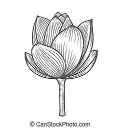 Lotus flower illustration, line pattern. Vector artwork....