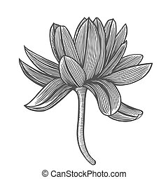 Lotus flower illustration - Lotus flower top view, line...