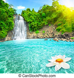 Lotus flower in waterfall pool