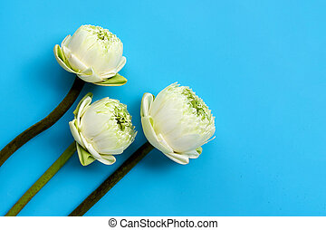 Lotus flower on blue background.
